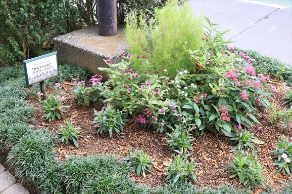 いつも手入れが行き届き、かわいいお花が見られる自主管理花壇