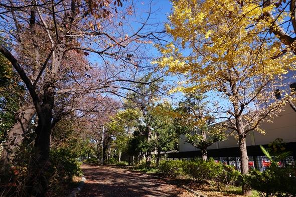 エリアによって雰囲気が変わるのも緑道の魅力。幡ヶ谷の消防学校のあたりは木々に囲まれた細い道が続きます。