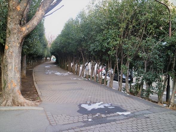 甲州街道に沿って、遊歩道が続いています。